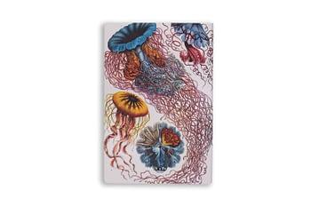 Bullet Journal sem pauta - ernest haeckel - Folk books 1