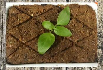 Kibe de Legumes com Berinjela Defumada 1