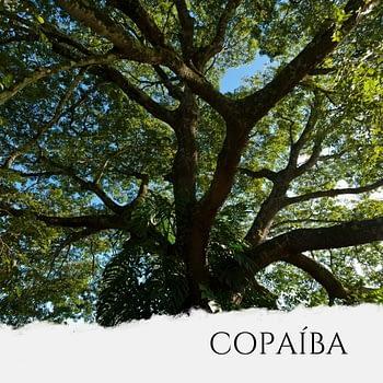 Óleo de Copaíba 1