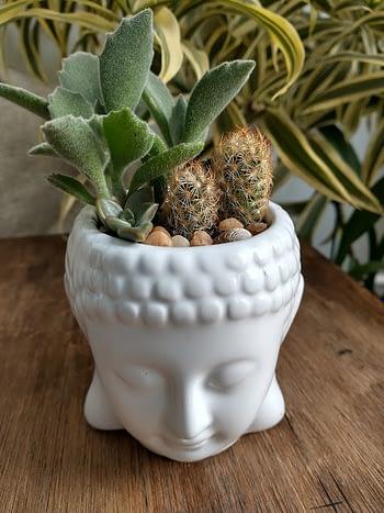 Arranjo Suculentas Buda - Branco 1